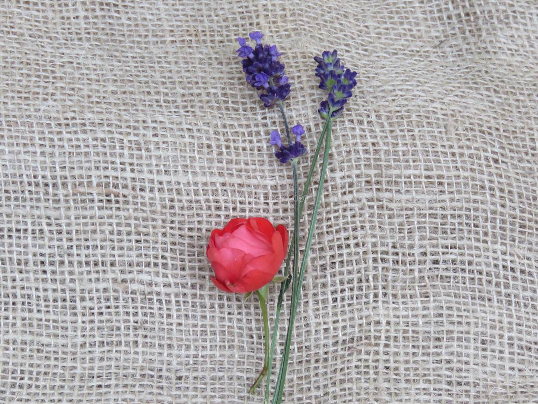 IMG_4118_image102-naturkosmetik-online-kaufen-biokosmetik